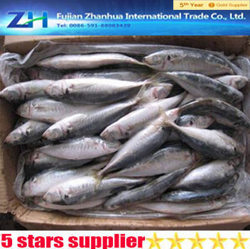 horse mackerel exporter ,mackerel fish horse,mackerel for sale
