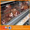 shuolong company economical and practical chicken breeding cage