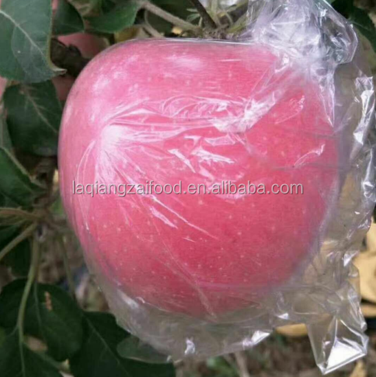 Chinese fresh 2017 sweet apple with more juice