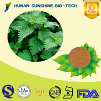 Best quality of Antidote Nettle P.E. powder 7% Beta-sitosterol