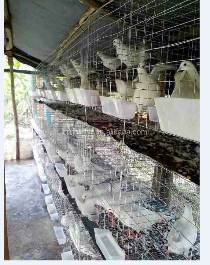 Capacity 24 pigeon of HUIJU automatic bird cage/pigeon breeding cage HJ-PC24