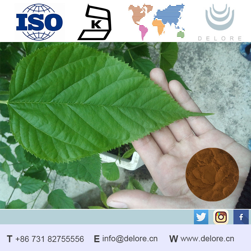 Professional Supplier Mulberry Leaf Extract 1-DNJ Powder Extraction Herbal Blood Pressure Medicines