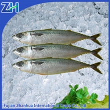 frozen fish mackerel ice fish for sale