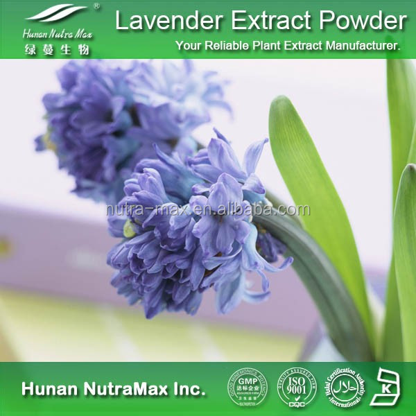 China Supplier Lavender Flower Extract, Lavender Flower Extract Powder 5:1 10:1 20:1