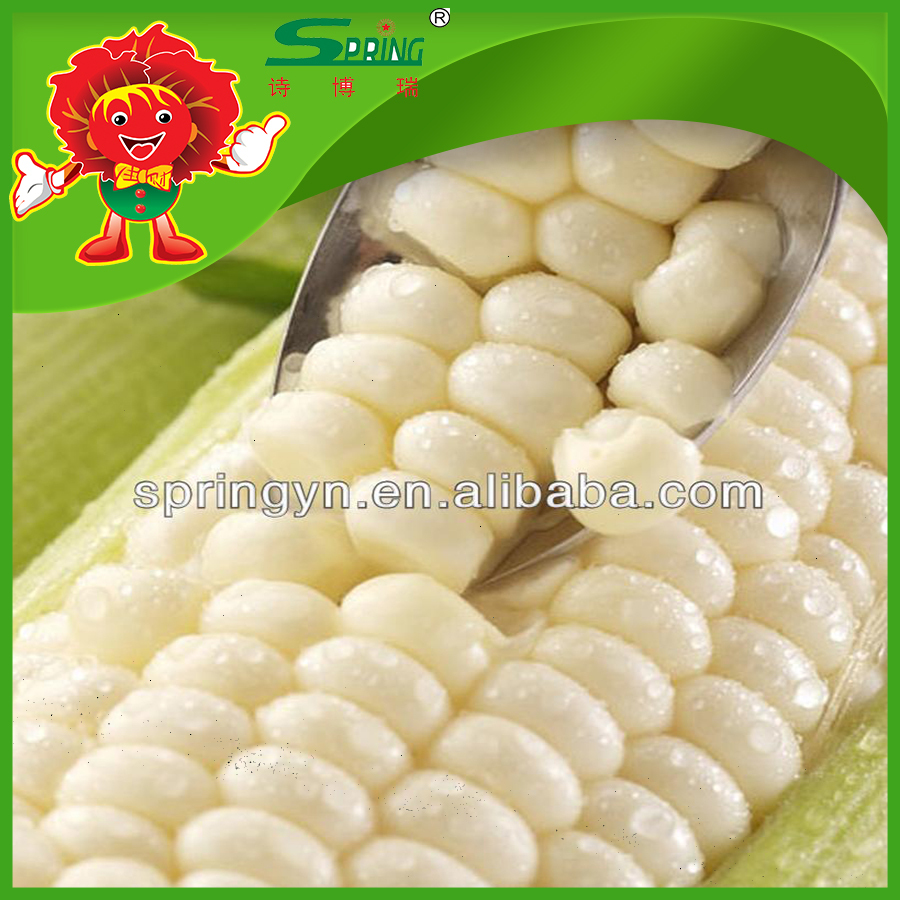 sweety maize cheap price for sale Yellow Corn for Human Consumption