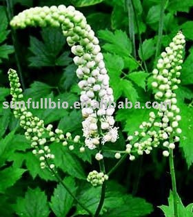 Black Cohosh Extract 2.5% Triterpene