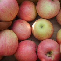 China All Kinds Of Organic Delicious Fresh Apple Fruit For Sale