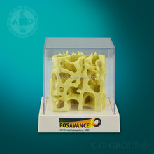 bone density cube,medical bone cube,plastic bone skeleton