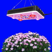 Orchids tissue culture 800w cob led grow light