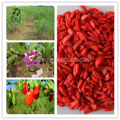ningxia 2016 wolfberry/goji/gojiberry in bulk, dried goji berry, organic goji berry