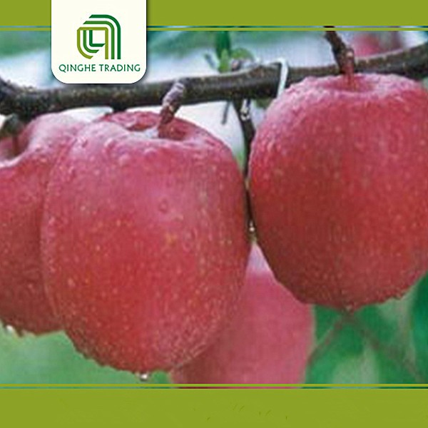wholesale bulk fresh fruit with low price