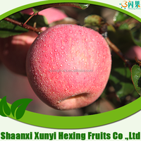 export fresh red delicious apple fruit fresh apple/fresh apple fruit