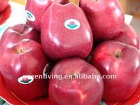 huaniu apple fresh fruit of China