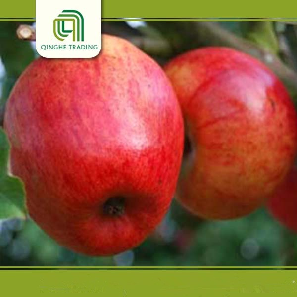 wholesale fresh apple fruit market price for red star apple