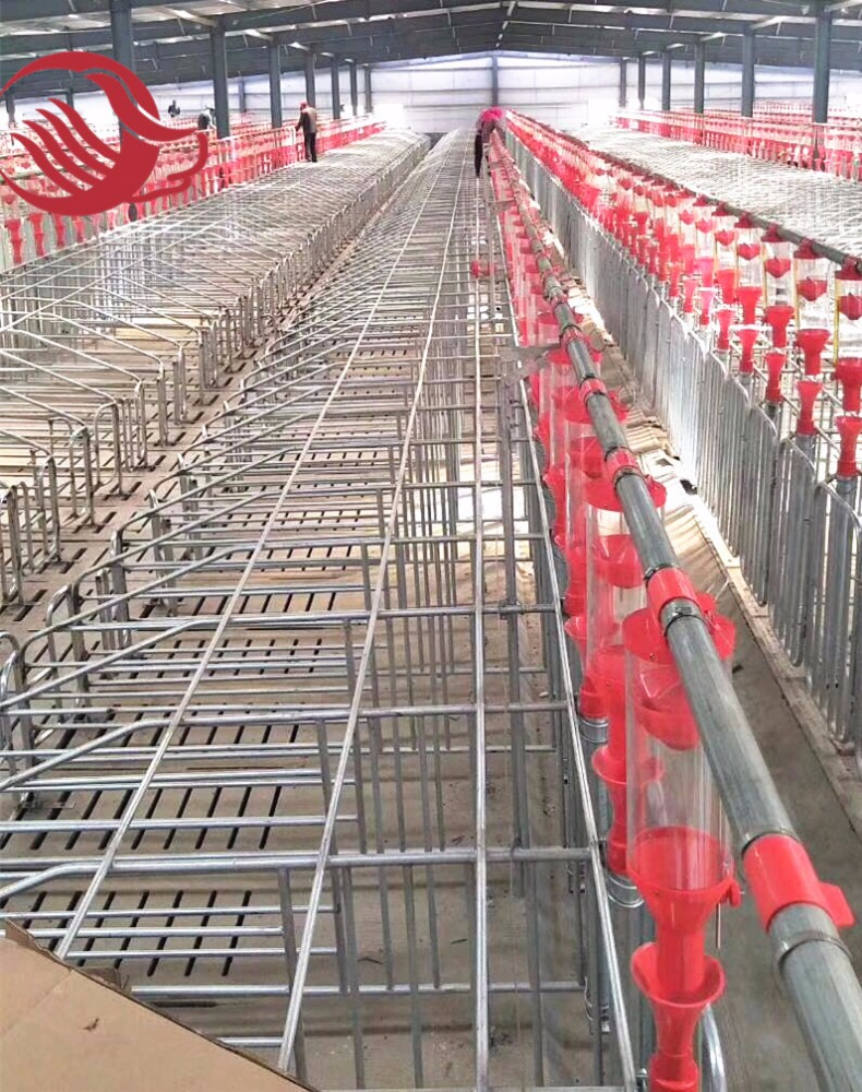 Pig farm equipment galvanizing gestation crate/stall for pig