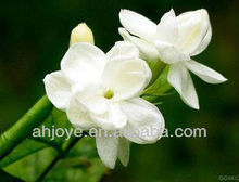 Hot sale natural gardenia extract