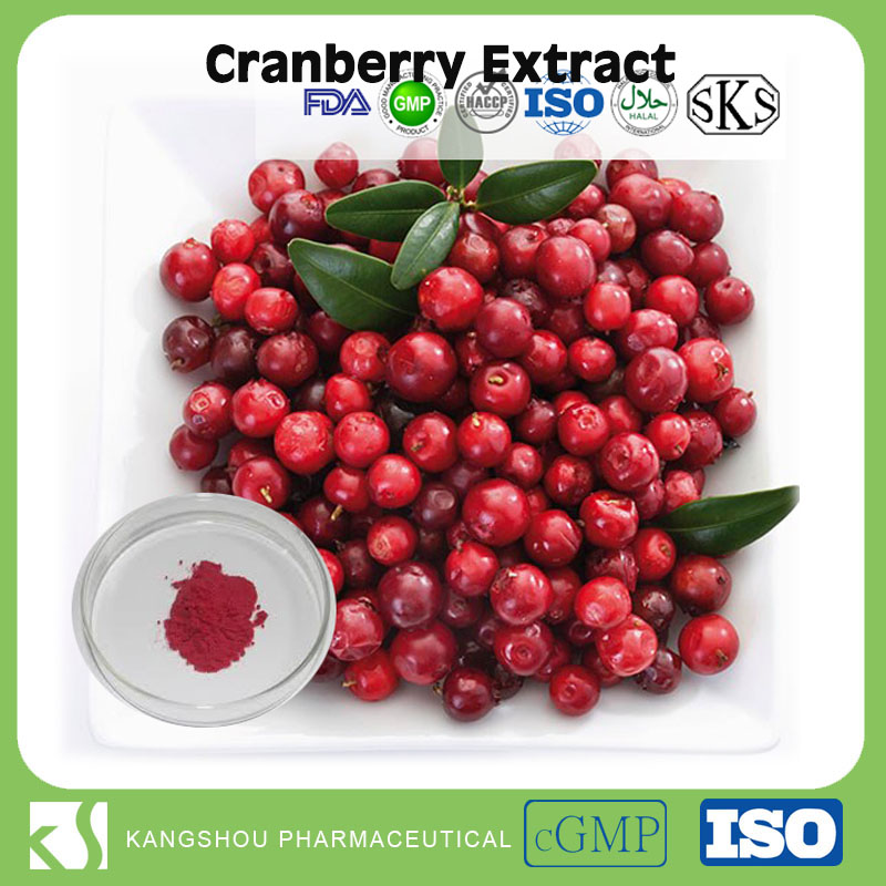 High quality Organic Anti-Oxidation Berry Fruit Bilberry/Cranberry Extract Powder with Anthocyanidin