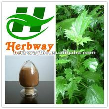high quality Nettle Root and Leaf extract,Nettle extract 4:1 supplier