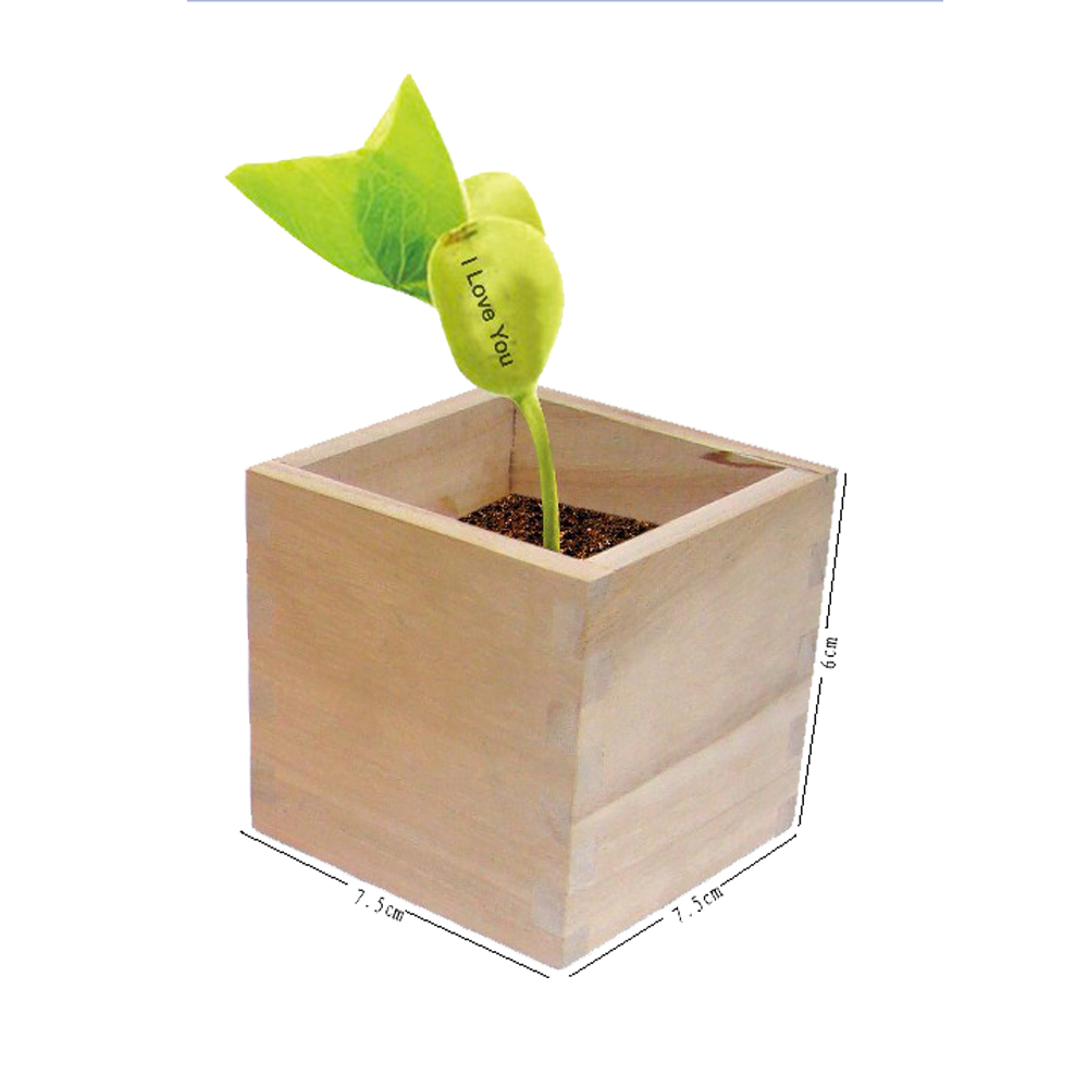 Wholesale Magic Message Bean Plant For Cheap Wood Diy Souvenir Less Than 1 Dollar Items