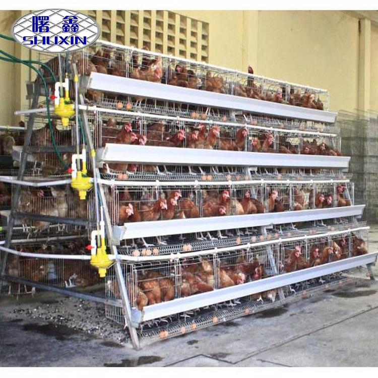 staring poultry farm used chicken crates in chicken sheds