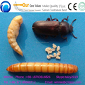 Mealworm/insects size selecting machine Multifunctional separating plant for yellow tenebrio