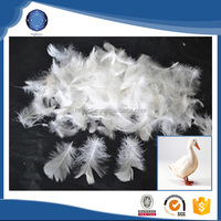 High quality washed wholesale duck goose feather price white