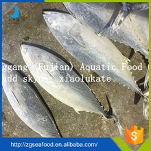 Zhonggang supplier seafood bonito