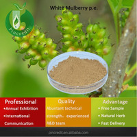 Medicinal indian mulberry/dry organic mulberry extract/White Mulberry p.e.