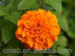 the best reliable 5%-80% super herbal marigold extract lutein and 0.2% zeaxanthin from China cnlab suppliers