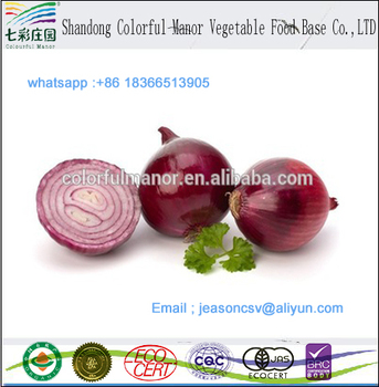 wholesale Fresh Onion / Yellow Onion / red onion exporters in china
