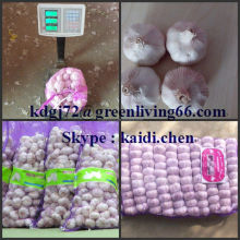 fresh garlic from 4.0-6.0 size galic factory can supply large quantity garlic