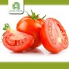 Hot selling farm fresh tomatoes for sale with CE certificate