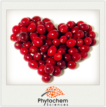 Chinese factory supplier Lingonberry Extract Cowberry Extract powder
