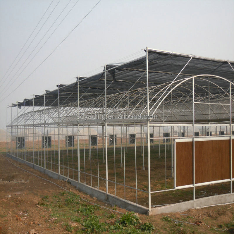 industrial multi span plastic film greenhouse for agriculture