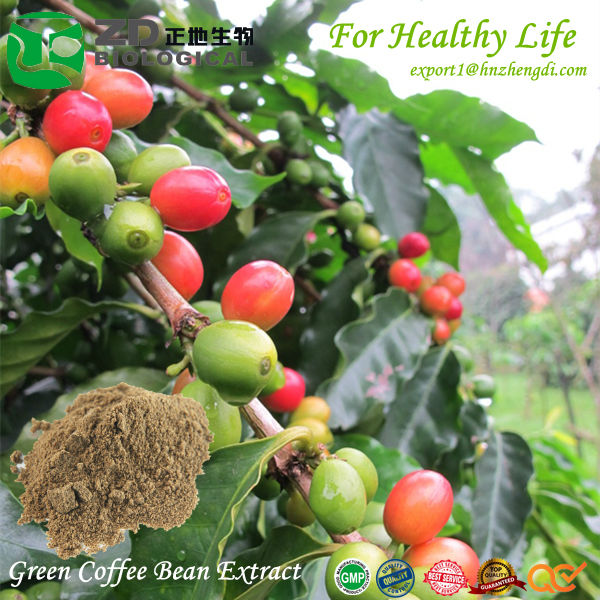 Fat burner/ green coffee bean extract on sale/ best quality in alibaba