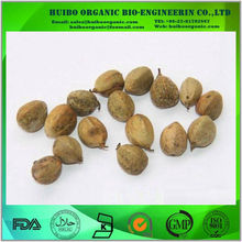 Croton Extract / wholesale Croton Seed Extract