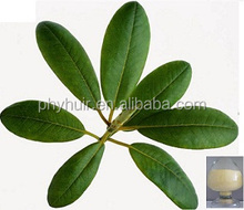 High Quality Loquat Leaf Powder Extract/Loquat Leaf P.E./Loquat Leaf Extract FOB Refer