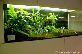 Ho To Build Wall In Terrarium