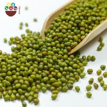 Hand picked top quality organic sprouting green mung beans