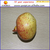 Yipai polystyrene Artificial fruit Pomegranate for home decoration