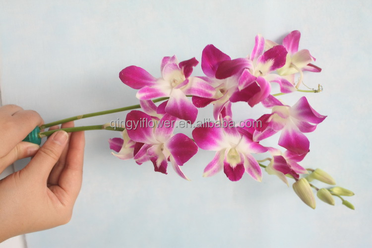 wholesale tailand fresh cut orchid plants