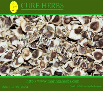 Cultivator of Supergenius PKM1 Moringa seeds