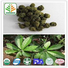 High quality Gynostemma Pentaphyllum Extract in bulk