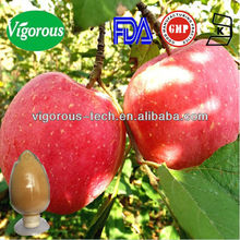 GMP factory supply bulk apple peel extract powder