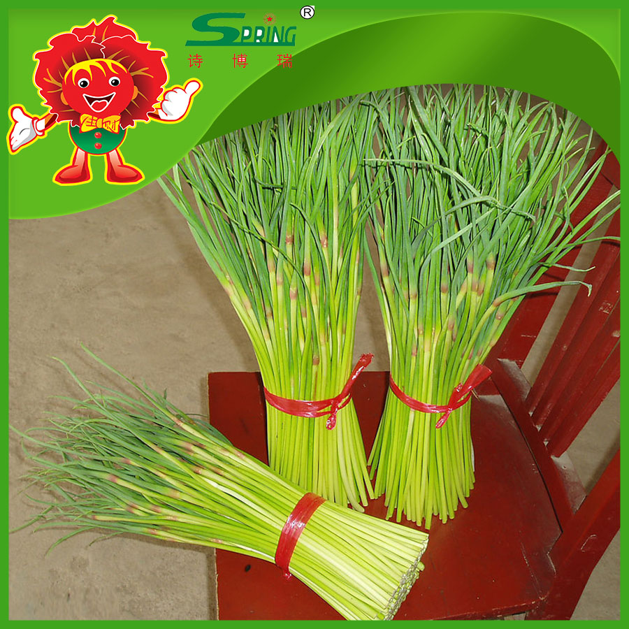 Wholesale Garlic Products Top Quality Garlic Sprouts