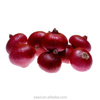 popular hybrid onion seeds for planting SXO No.2