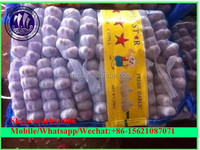 normal white and pure whiite fresh garlic export to SOUTH EAST, MIDDLE EAST, RUSSIA