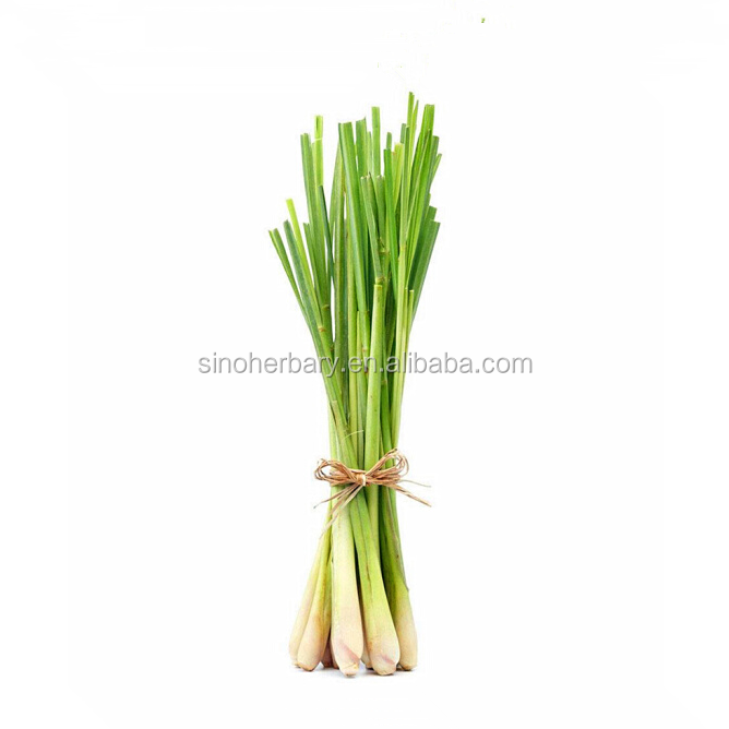 Cymbopogon Citratus 90 Gramm Lemongrass