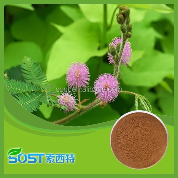 Best Selling High Quality Mimosa Hostilis Root Bark Powder