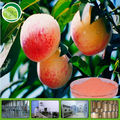 100% soluble peach fruit powder
